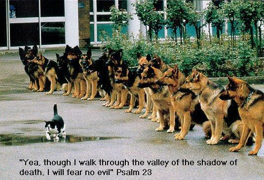 Psalm 23 2 NIV